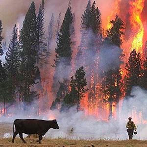 sierra wildfire